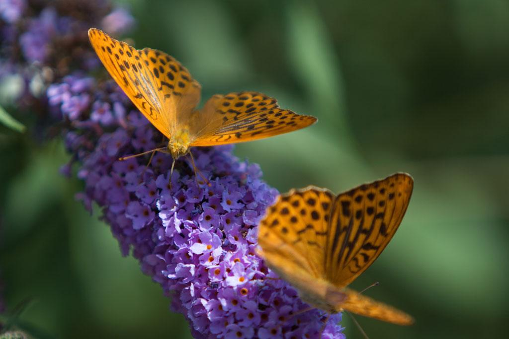 Slide Bordano butterflies house